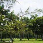 Guardianas de la naturaleza alzan su voz por una San Pedro Sula verde