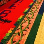 Exposición de alfombras de aserrín en las calles aledañas a la Plaza Lempira, llenará de esplendor a Intibucá.