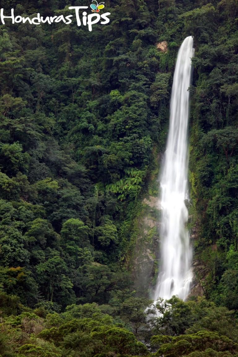 Mientras pasea por Pico Bonito verá increíbles cascadas, cataratas y, quizá con suerte, la única ave endémica del país: el colibrí esmeralda.