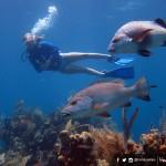 Utila, paraíso de coral bajo el mar