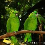 Diseñarán estrategia para desarrollar aviturismo en Honduras