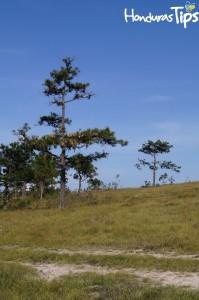 Bosque Enano, un extraordinario y singular bosque ubicado en Intibucá.