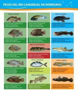 peces rio1