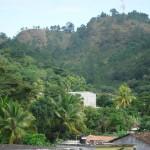 Como en todo el territorio patepluma sus tierras son propicias para el cultivo del café.  Foto: Municipalidad de San Nicolás.