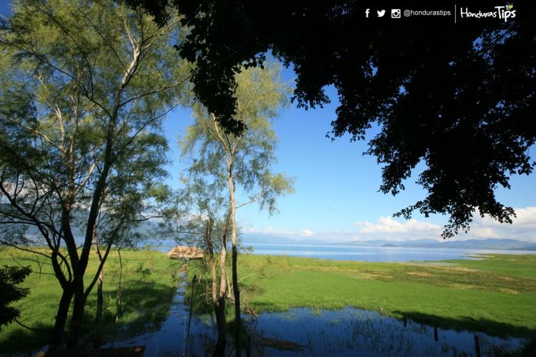 """Tanta vida en """"El Lago"""", como se le conoce popularmente, se debe a los humedales rebosantes de agua."""