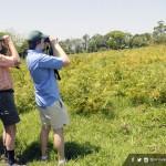 Turismo de observación de aves en Honduras