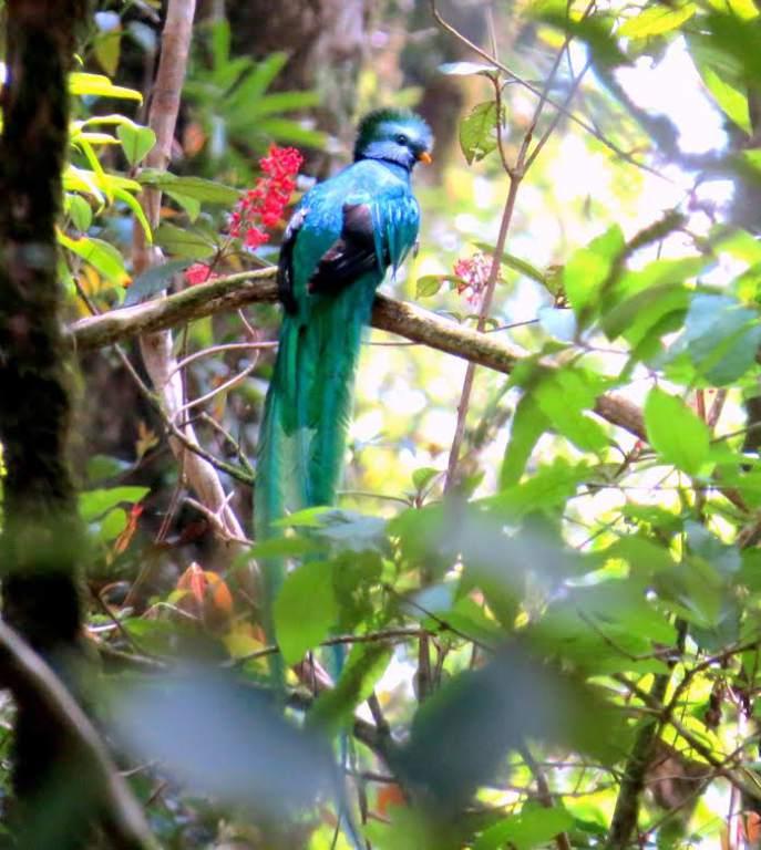 El área geográfica donde habita el quetzal mesoamericano incluye América Central y el sur de México.