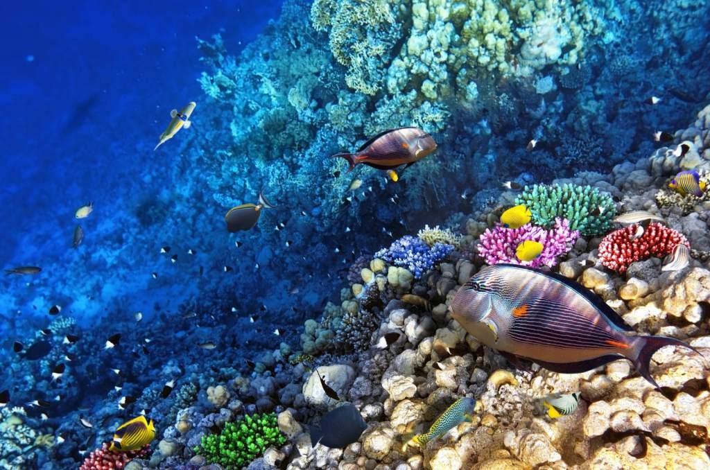 El arrecife de Islas de la Bahía posee, según expertos, más del 90 por ciento de las especies animales identificadas en todo el Caribe.