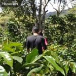 Coffee tours: una aventura diferente en La Paz y el occidente de Honduras