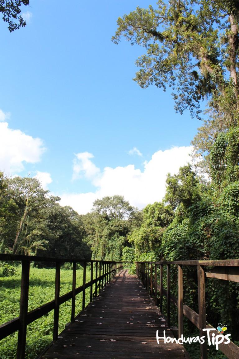 """El parque arqueológico Los Naranjos cuenta con senderos en medio de los """"fangos"""" para hacer poder caminar sin problemas en la búsqueda de aves."""