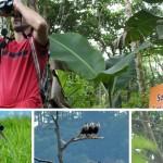 El Lago de Yojoa nido del primer evento internacional de avistamiento de aves