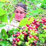 Santa Bárbara celebrará el Festival de Café patepluma