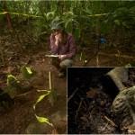 Honduras lidera lista de los siete grandes descubrimientos arqueológicos de 2015 según Nat Geo