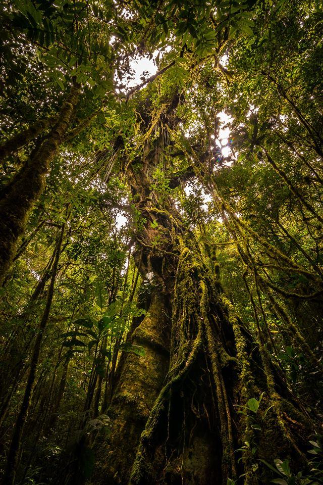 Los colores verdes sobresalen entre lo húmedo del tronco de los árboles.