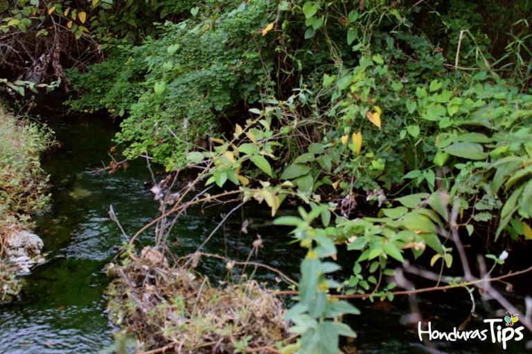 Estas aguas termales vírgenes, se pueden encontrar en la comunidad de Aguas Calientes de Olanchito.