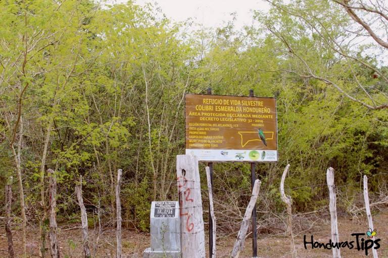 El Refugio de Vida Silvestre Colibrí Esmeralda tiene unas 3 mil 500  hectáreas de área protegida.