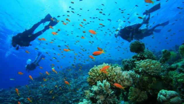 En Roatán se puede ver la vida marina a todo su esplendor.