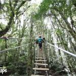 Canopy La Tigra ofrece distintas estaciones para apreciar el esplendor del bosque nublado.