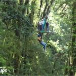 Canopy La Tigra cuenta con 2 puentes colgantes y 10 plataformas, algunas de ellas localizadas a 25 metros de altura sobre enormes árboles.