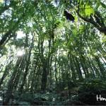 El Parque Nacional La Tigra tiene una extensión de 24,040 hectáreas de bosque dividida en zona de amortiguamiento y zona núcleo, que forma parte de la cadena montañosa central de Honduras.
