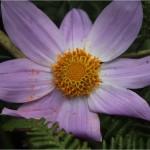 Flora de la reserva