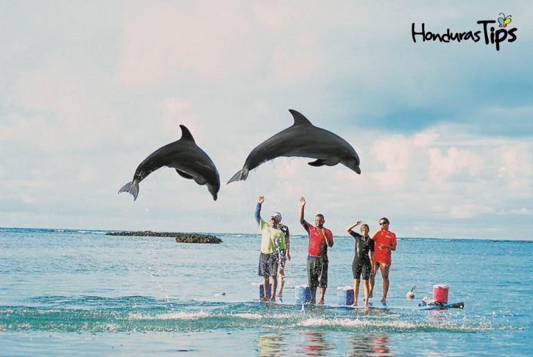 En Roatán puede ver la libertad de los delfines en el agua.