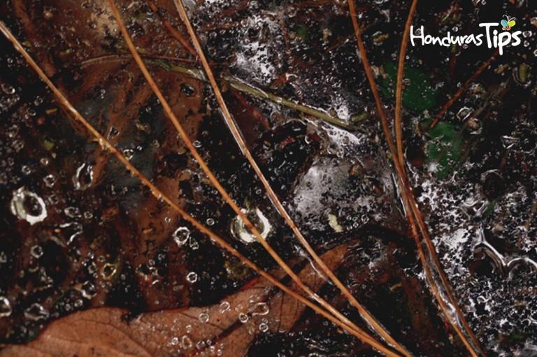 Dentro de Celaque podrá encontrar un ecosistema amplio y muchas cosas que llamen su atención.