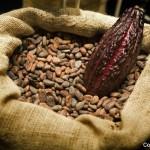 Realizarán festival de café y cacao en Tegucigalpa