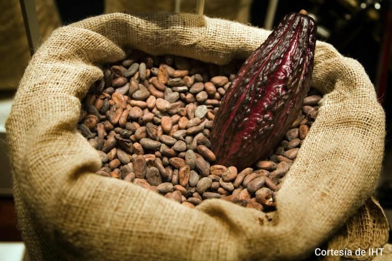 El cacao hondureño es apetecido por las casa de chocolates en el mundo.