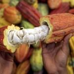 Asista a la Feria Nacional del Cacao Copán 2016