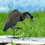 Realizan primer Birding tour en Honduras