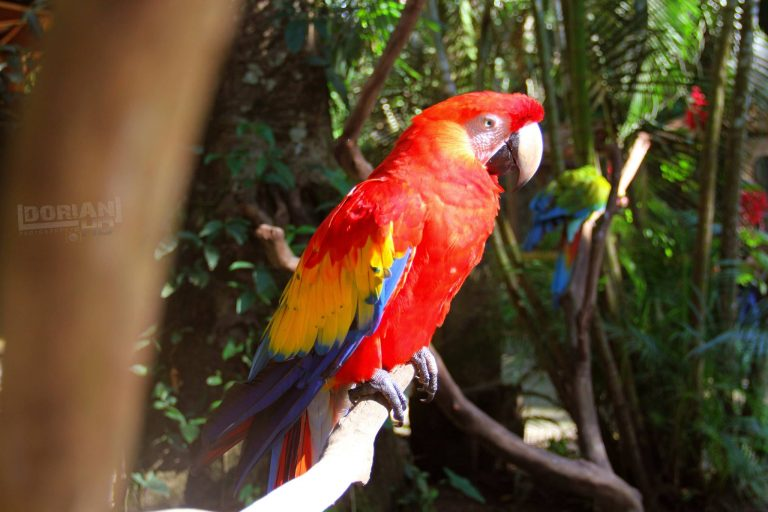 Copán Ruinas es un paraíso para avistar aves.