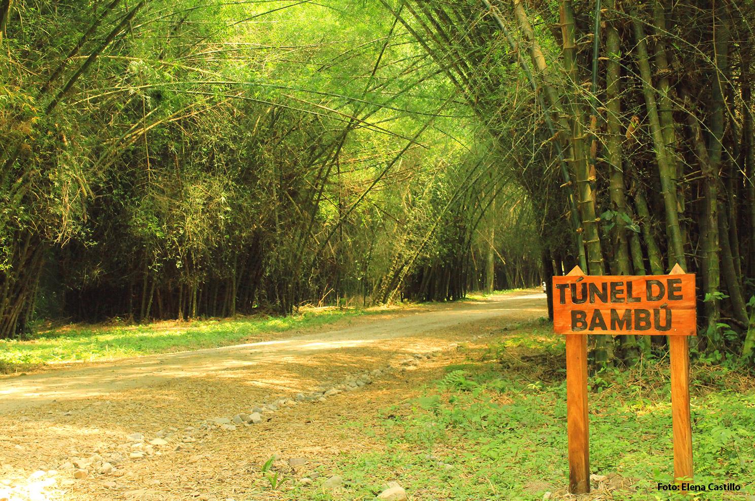 Conozca Lancetilla, un paraíso al norte de Honduras
