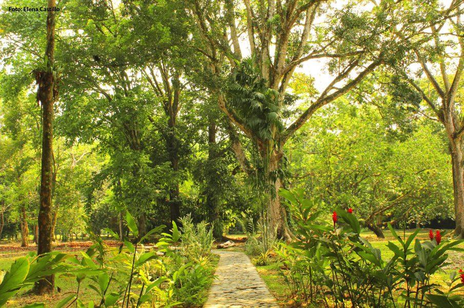 Lancetilla posee uno de los muestrarios de orquídeas más completos del mundo y contiene una colección de 824 especies entre maderables, frutales, tóxicas y ornamentales.
