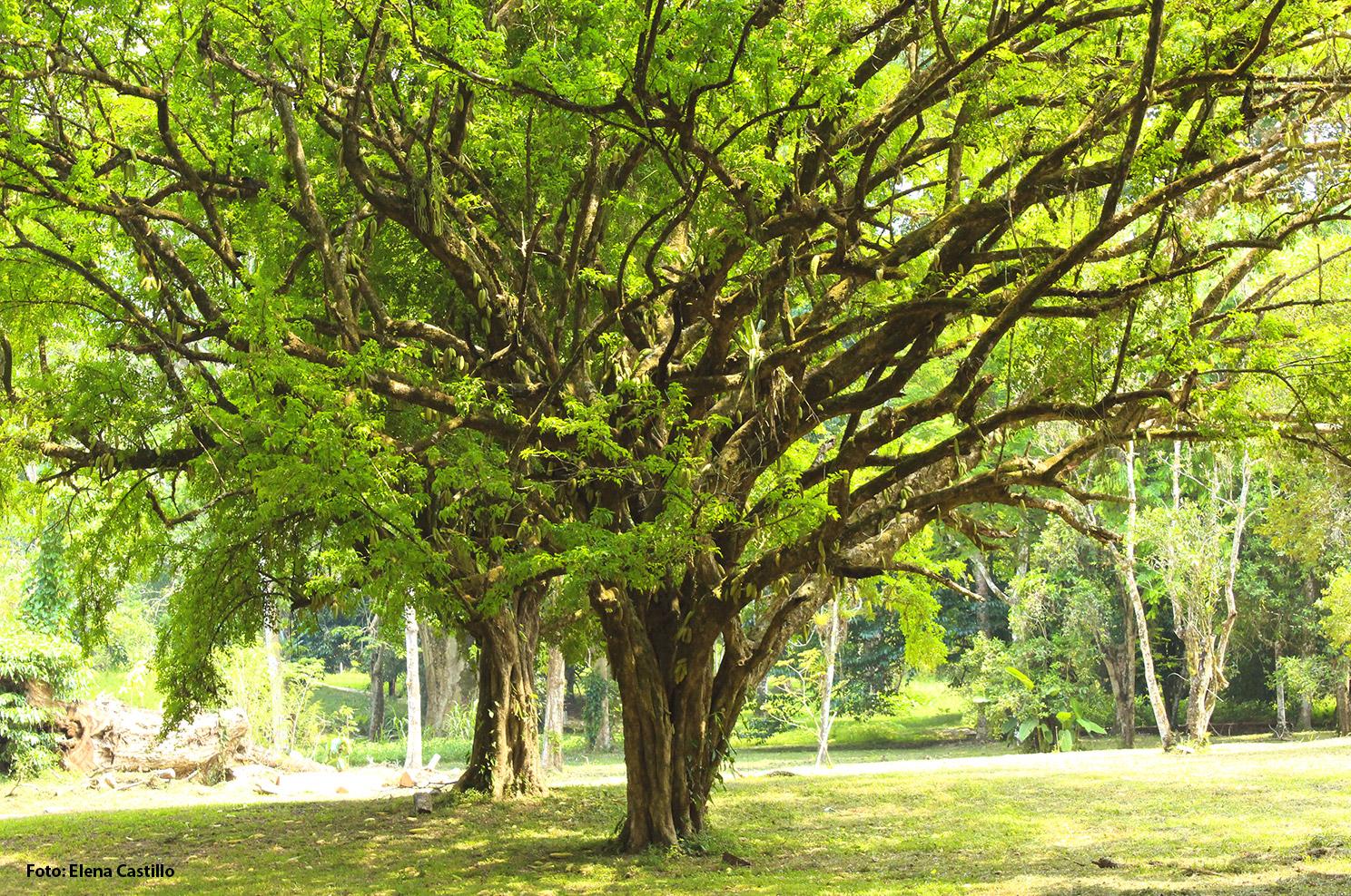 El jardín botánico cuenta con un grupo de árboles, arbustos y hierbas identificadas con placas de metal. Éstas indican el nombre de la familia a que pertenecen, el nombre científico y el año de introducción.