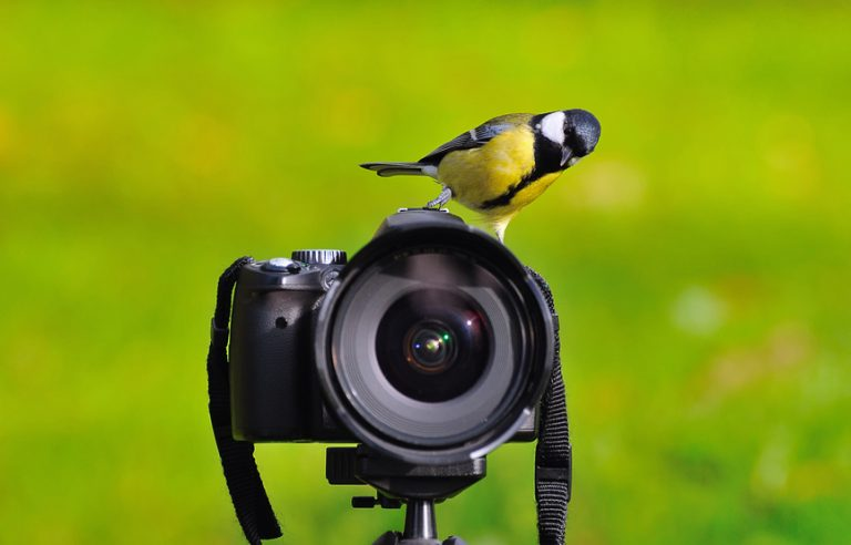 The photographer of nature.