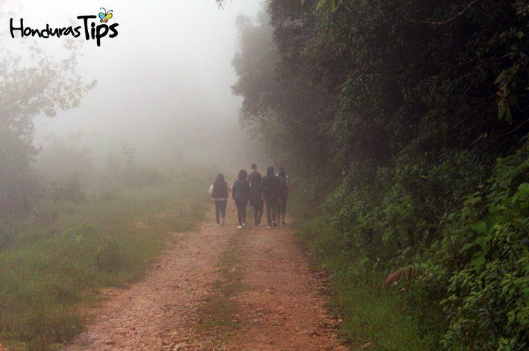 El Güisayote es un lugar como ninguno otro en Honduras, su clima permite temperaturas bajas de hasta 0 grados en temporadas de invierno. También posee un excelente ecosistema.