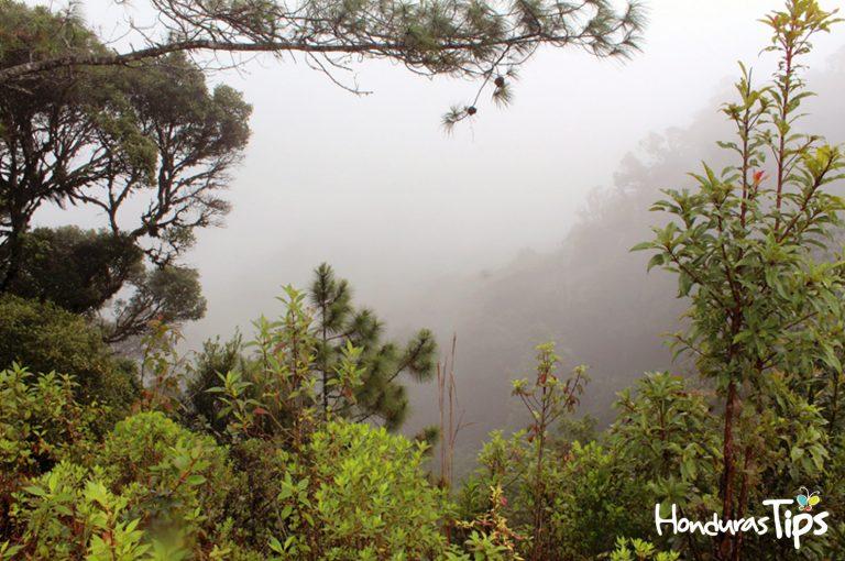 La Reserva Biológica Güisayote en Ocotepeque es un atractivo que debe visitar si es amante de las bajas temperaturas y naturaleza en su máximo esplendor.