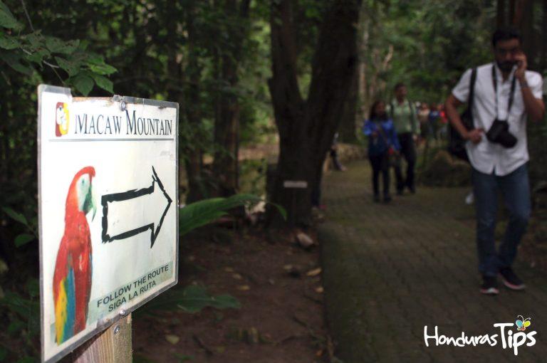 macaw-copan-ruinas