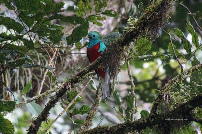 Nombre: Quetzal