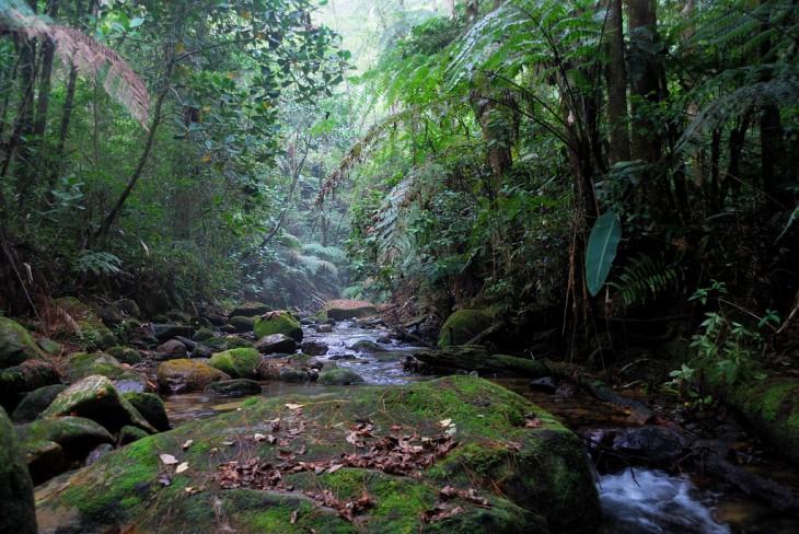 Honduras es un país lleno de naturaleza.