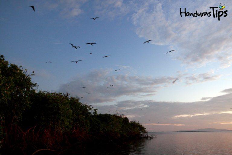 Isla de los Pájaros.