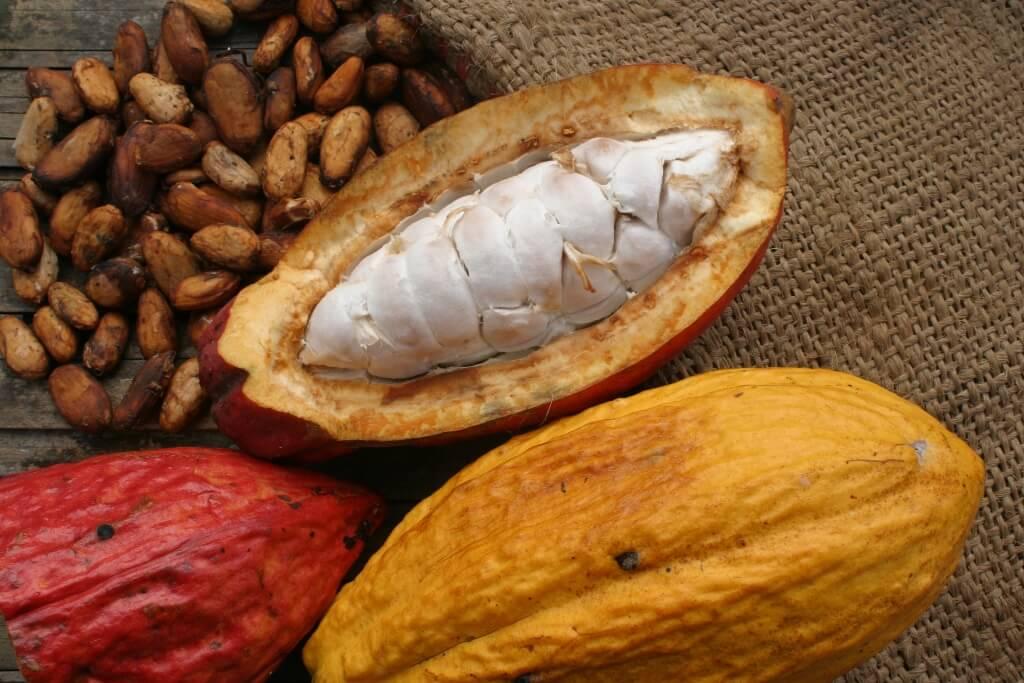 CNN revela al mundo el secreto del cacao gourmet de Honduras
