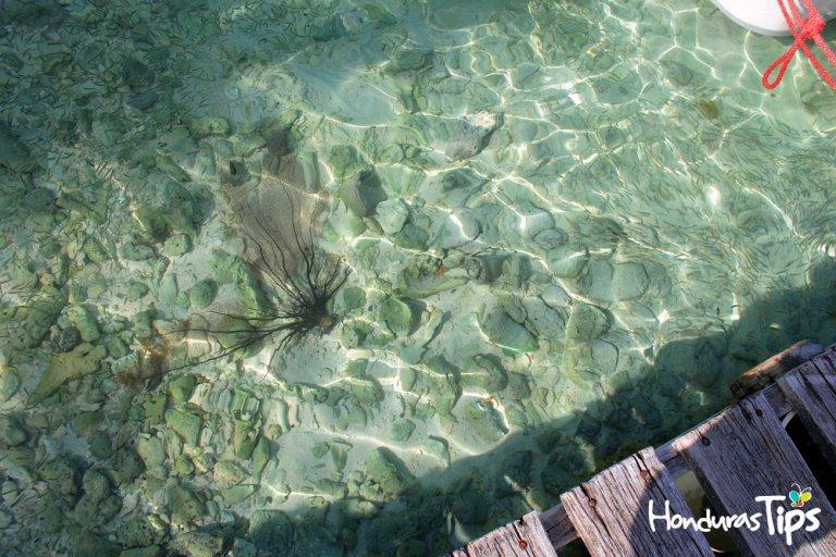 En estos cayos puede encontrar arrecifes de poca profundidad.