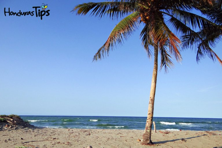 Miami-Tela-(2)