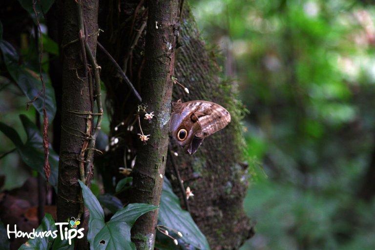 Rawacala-Ecopark-(13)