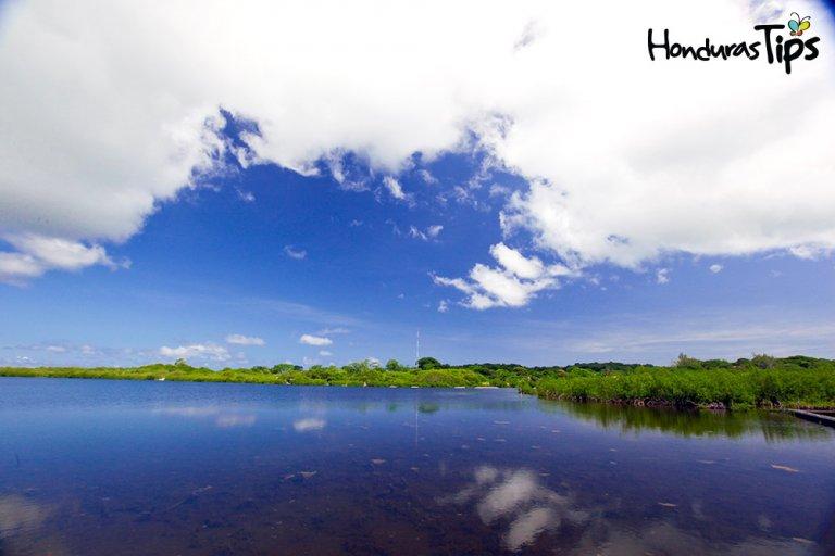 Laguna-y-manglares-de-Utila