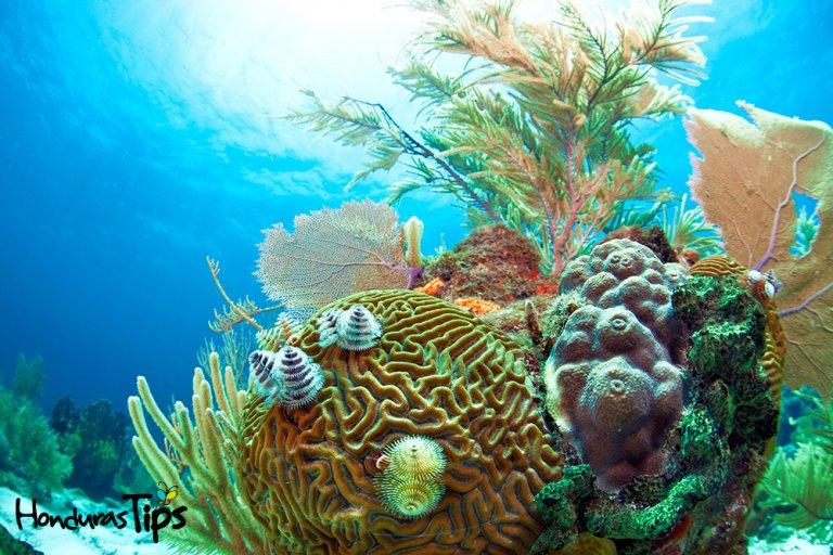 arrecifes-1