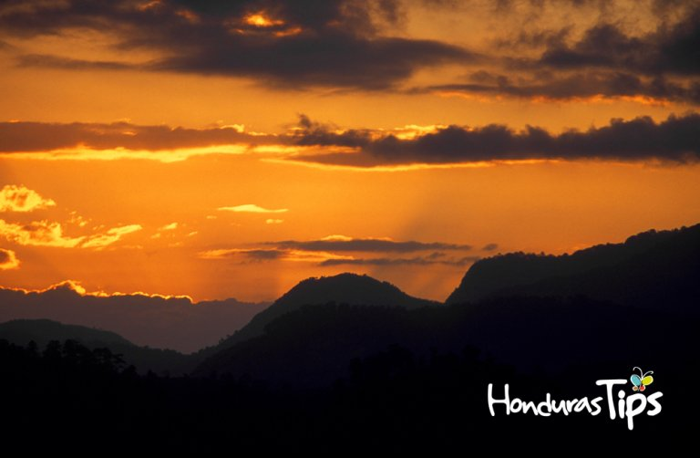 a evening in the tropical Forest up the hills of the city Copan in Honduras in Central America,