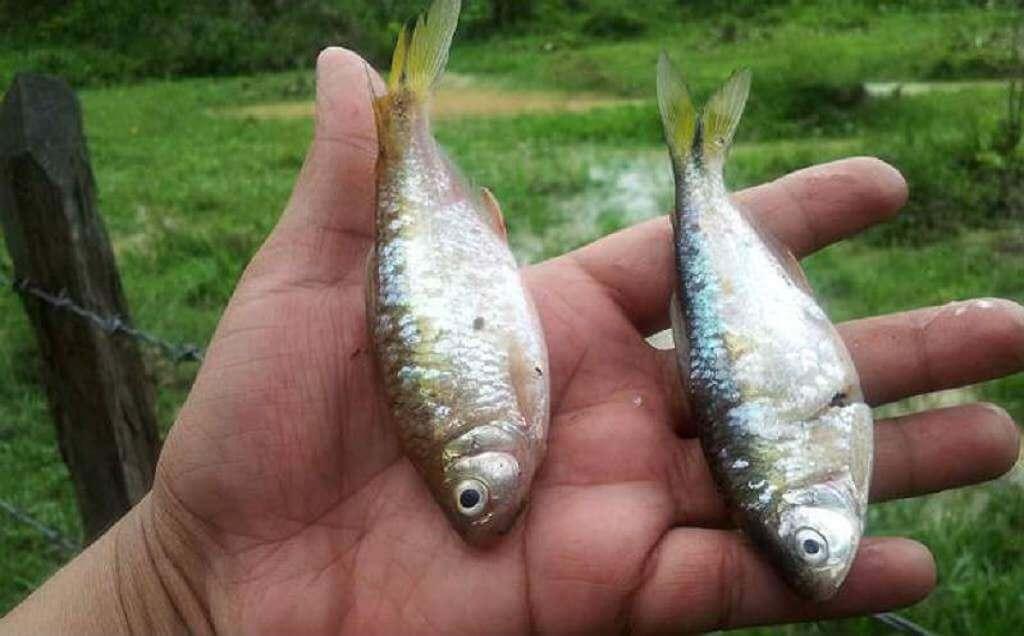 Lluvia de peces, Yoro